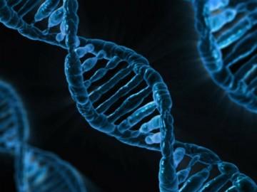 Descubrimiento de un nuevo gen implicado en el Trastorno del Espectro Autista