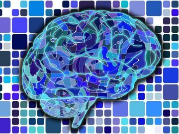 Una región del cerebro sin explorar podría ser la clave para el autismo